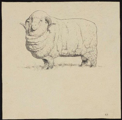 An image of Prize merino ram by Lloyd Rees