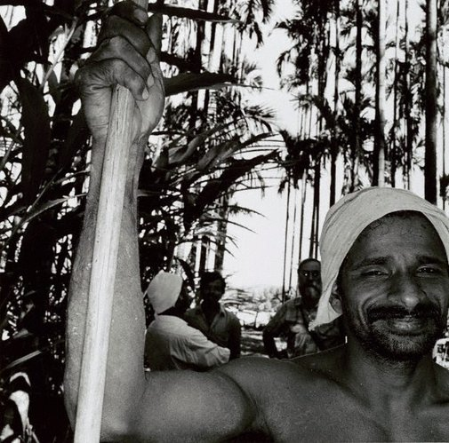An image of Palm tree climber, Mysore Hills, India by Max Pam