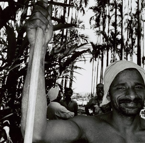 An image of Palm tree climber, Mysore Hills, India