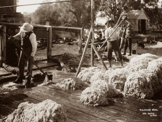 An image of Washing wool