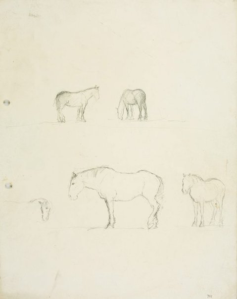 An image of Horse studies by Lloyd Rees