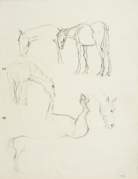 An image of recto: Horse studies verso: Sketch of horse by Lloyd Rees