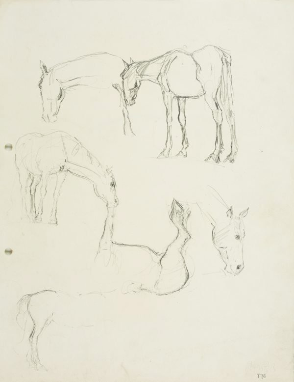 An image of recto: Horse studies verso: Sketch of horse
