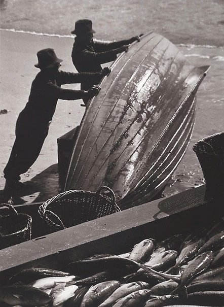 An image of Palm Beach salmon fishers by Hal Missingham