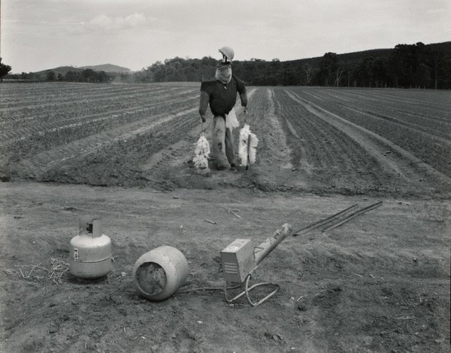 An image of Forestry commission nursery near Tumut, New South Wales