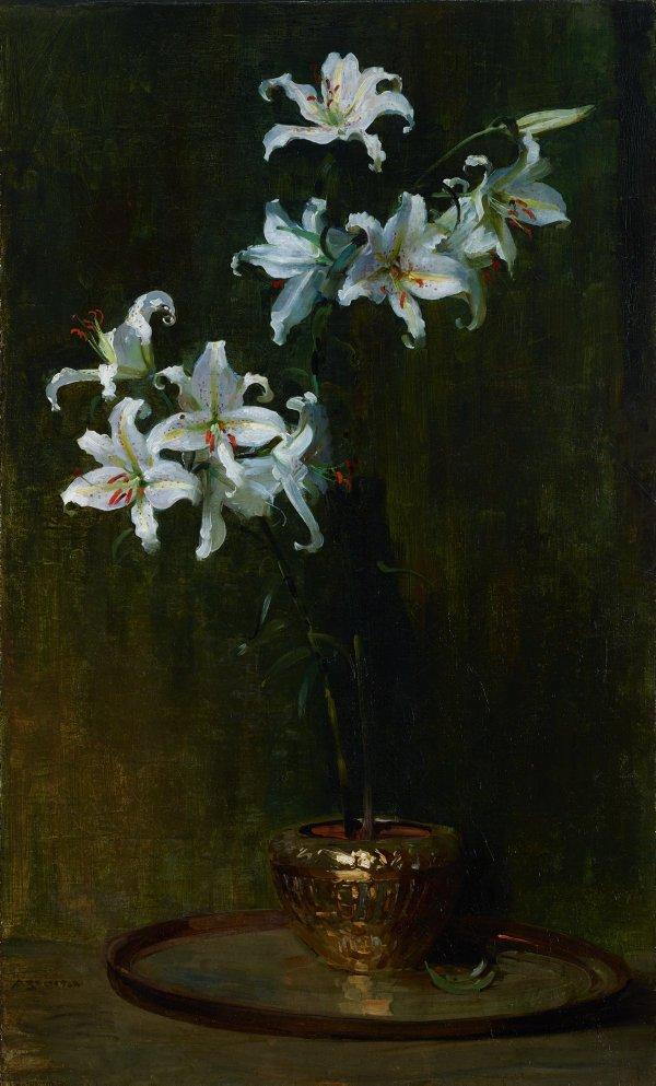 An image of Lilium Auratum
