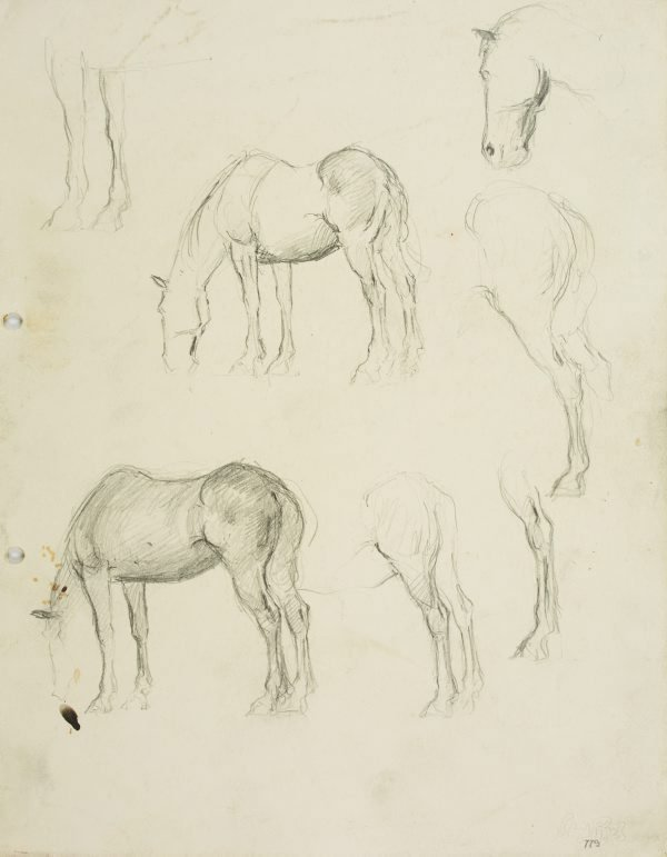 An image of Horse studies