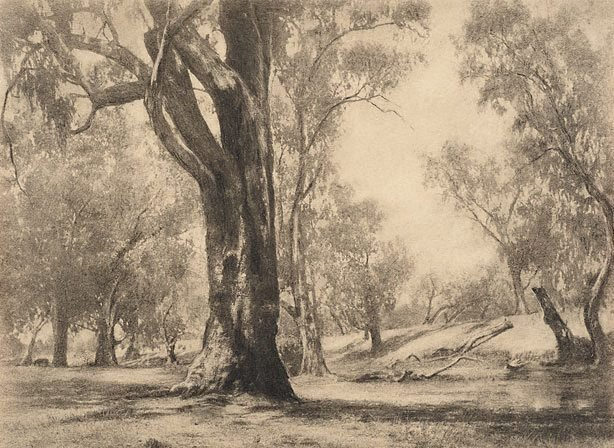 An image of River gums