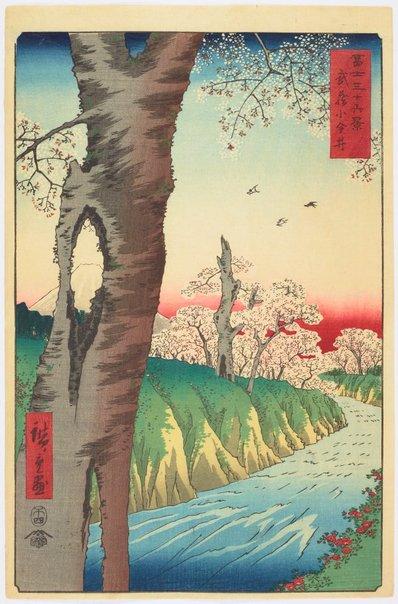 An image of Koganei in Musashi Province (Musashi koganei) by Hiroshige Andô/Utagawa