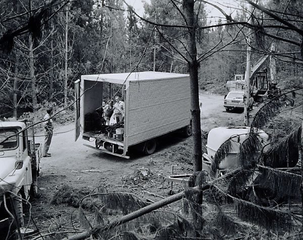 An image of CSR employees, forest near Tumut, New South Wales