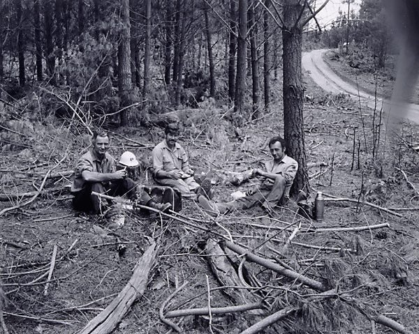 AGNSW collection Fiona Hall CSR employees, forest near Tumut, New South Wales (1982) 140.1987