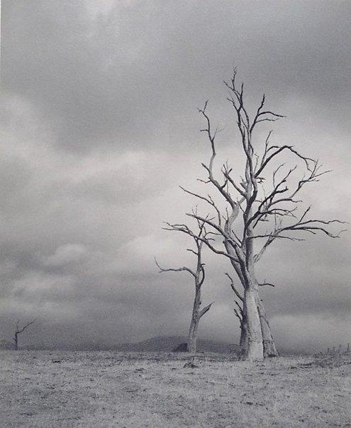 An image of Defiance by Harold Jones