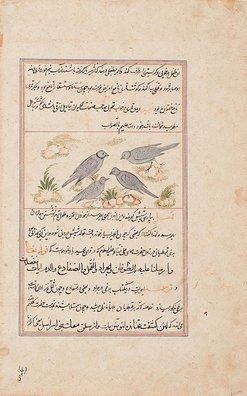 An image of A folio from a manuscript of the 'Ajā'ib al-makhlūqāt wa-gharā'ib al-mawjūdāt (The wonders of creation) by