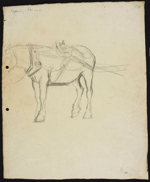 An image of Sydney horse