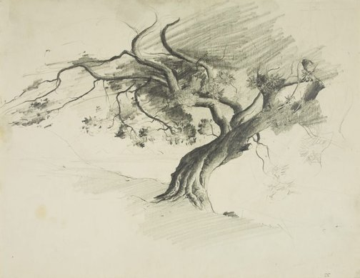 An image of Fig tree, McMahon's Point by Lloyd Rees