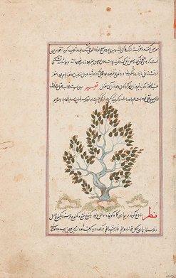 An image of A folio from a manuscript of the 'Ajā'ib al-makhlūqāt wa-gharā'ib al-mawjūdāt (The wonders of creation) by