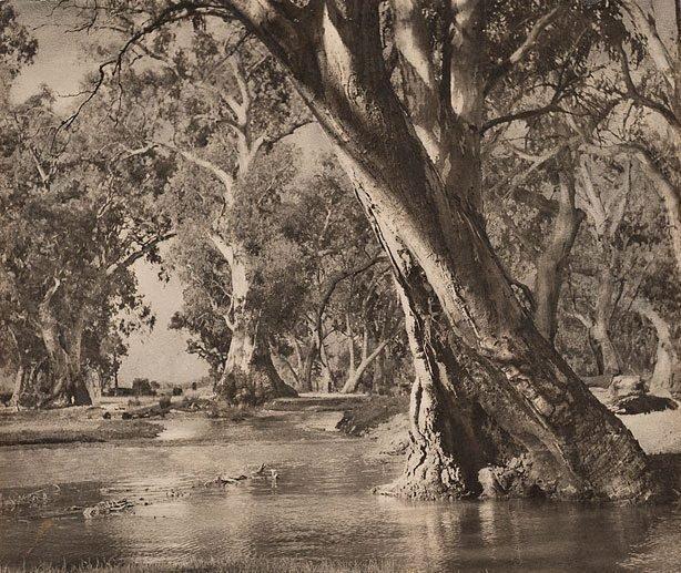 An image of A billabong