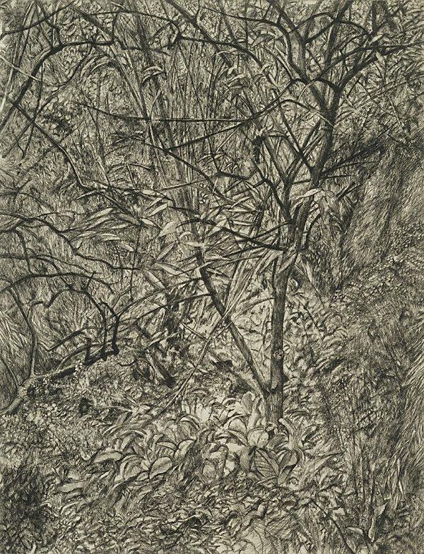 An image of Garden in winter