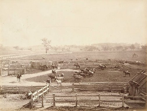 An image of Stockyards by Charles Bayliss