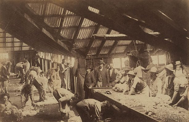 An image of Shearing shed