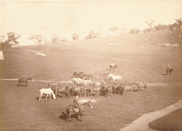 An image of Stockman and a group of horses