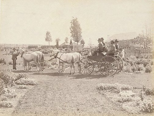 An image of Horse-drawn buggy in front of homestead by Charles Bayliss