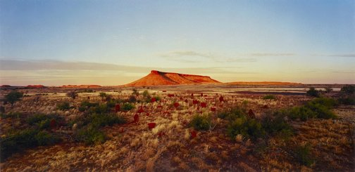 An image of brumby mound #6 by Rosemary Laing