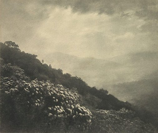 An image of Mountain flowers by Harold Cazneaux