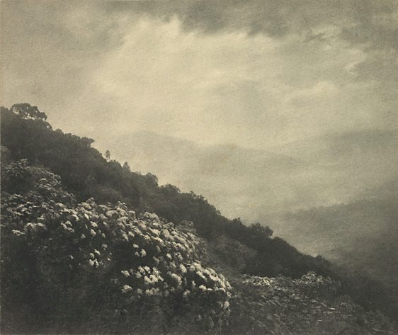An image of Mountain flowers