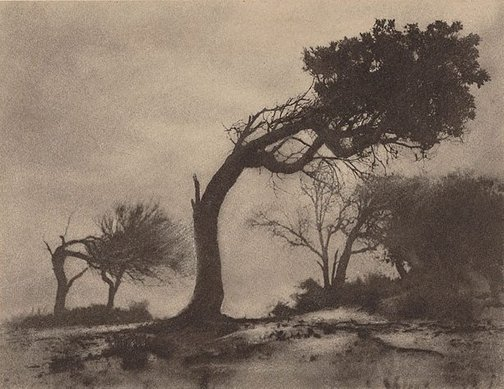 An image of The bent tree, Narrabeen by Harold Cazneaux