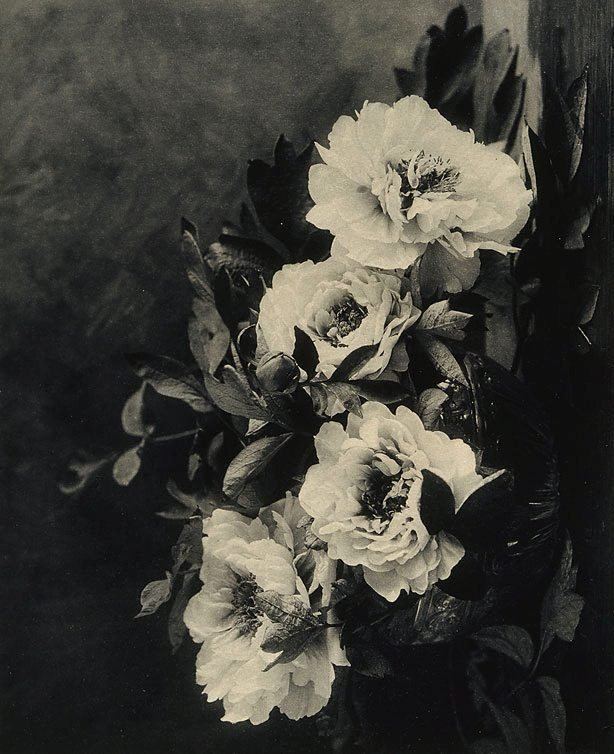 An image of Peonies