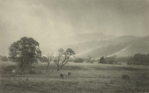 An image of The evergreen valley of the Macquarie, New South Wales by Harold Cazneaux