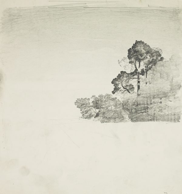 An image of Trees