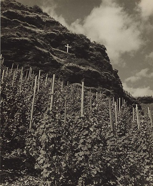 An image of Vineyard on the Moselle by Wolfgang Sievers