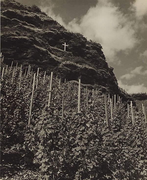 An image of Vineyard on the Moselle