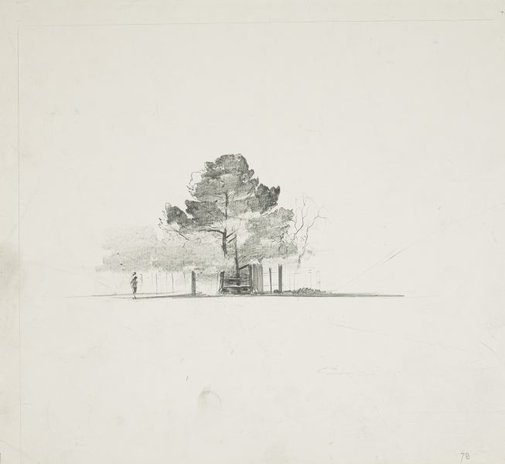 An image of Trees behind a fence by Lloyd Rees