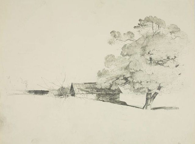 An image of Trees and shed in the country