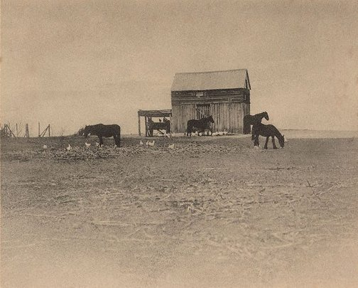 An image of Black horses by Harold Cazneaux