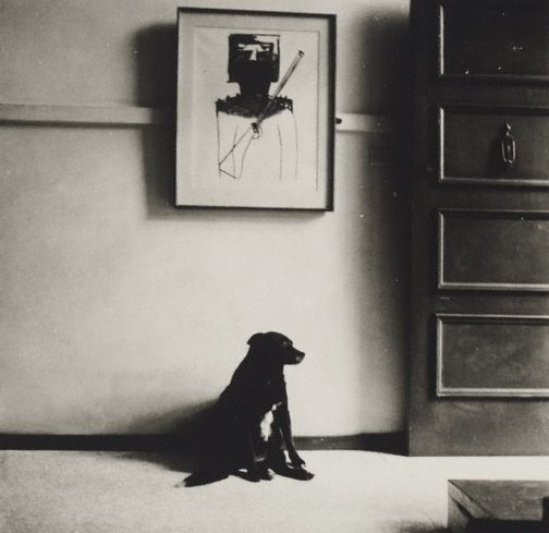 An image of John Olsen's dog in front of Nolan's 'Ned Kelly', Sydney by Lewis Morley