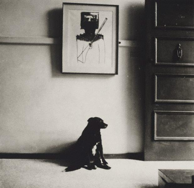 An image of John Olsen's dog in front of Nolan's 'Ned Kelly', Sydney