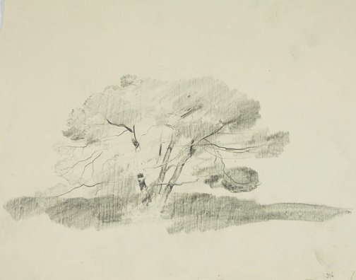 An image of Tree by Lloyd Rees