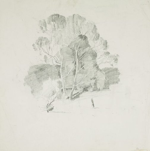 An image of Trees by Lloyd Rees