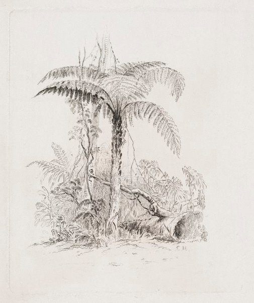 An image of Study of a tree fern by Conrad Martens