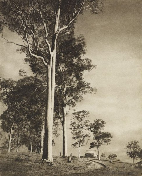 An image of Gums at sundown by Stanley W. Eutrope