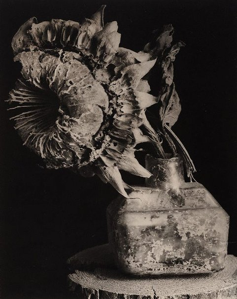 An image of Fossilised flower by Lewis Morley