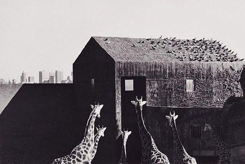 An image of Taronga Zoo, Sydney by Ingeborg Tyssen