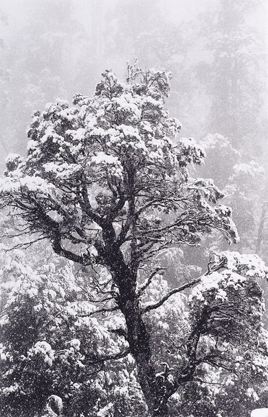 An image of Summer snow, Tasmania by David Moore