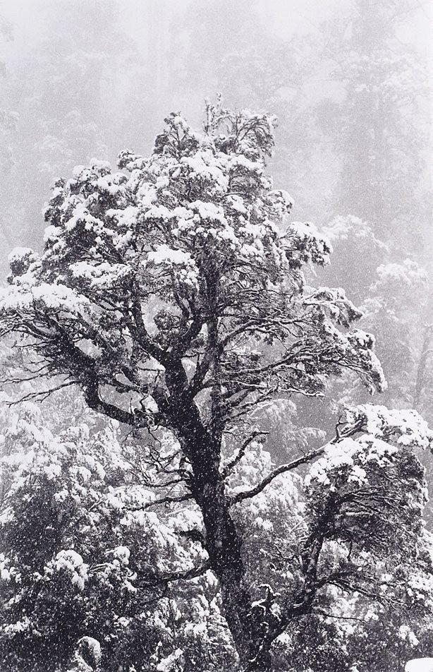 An image of Summer snow, Tasmania
