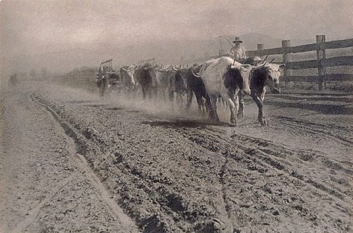 An image of Droving cattle by James S Stening