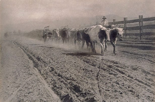 An image of Droving cattle